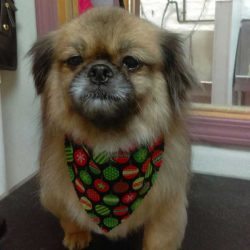 Pur-Breed-Dog-Grooming-Chicago